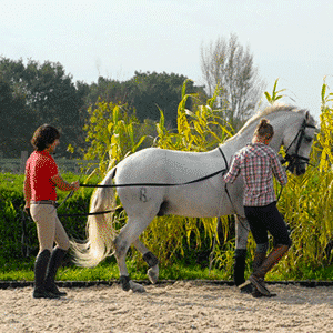 Cheval Bordeaux - Bordeaux Cheval Club - Poney Club  - Dressage